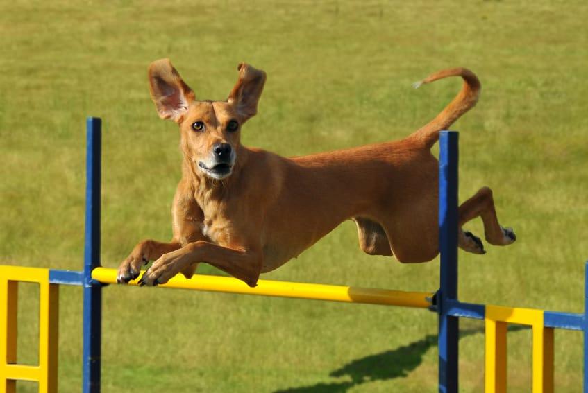 dog agility group class