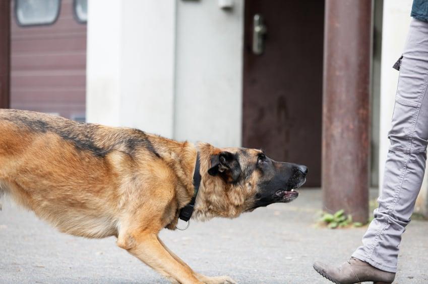 problem dog group class training