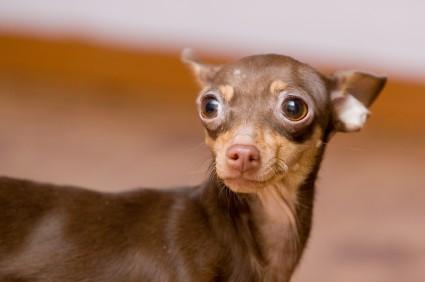 dog scared of thunder