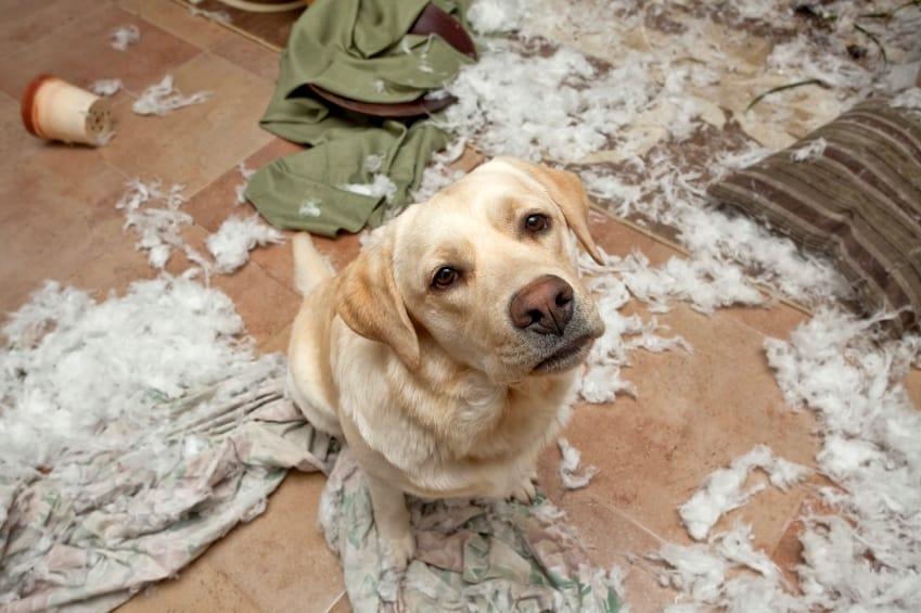 destructive dog behavior