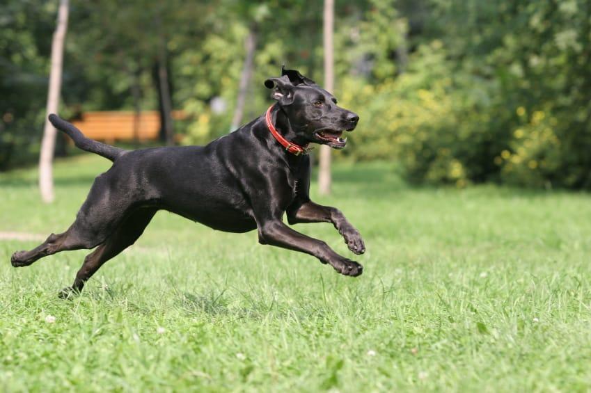 in kennel dog training nc