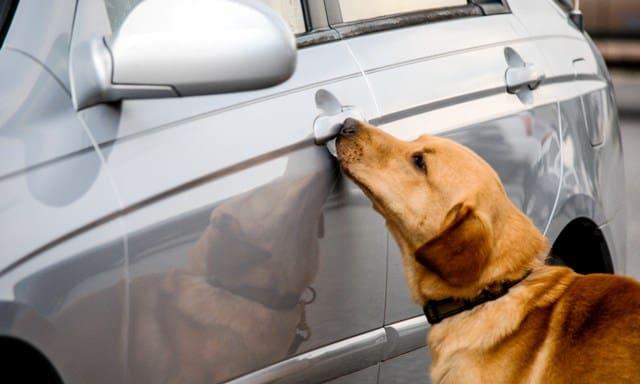 private drug dog services