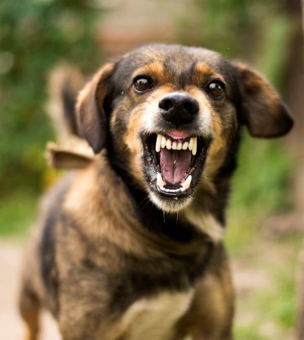 aggressive private lesson dog training