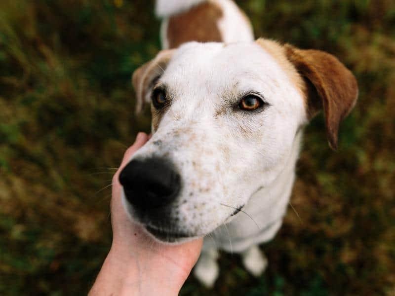 basic in kennel dog training