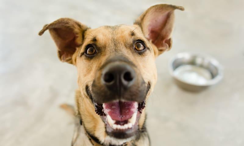 Dog Training Services Highland Canine Training