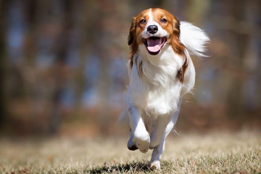 off leash group class dog training