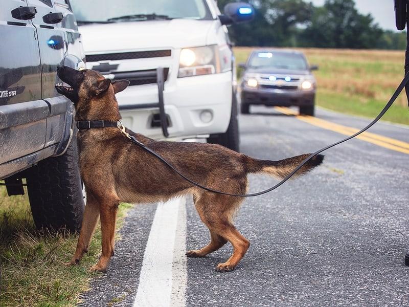 scenario based police k9 training course