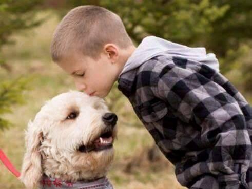 labradoodle service dog