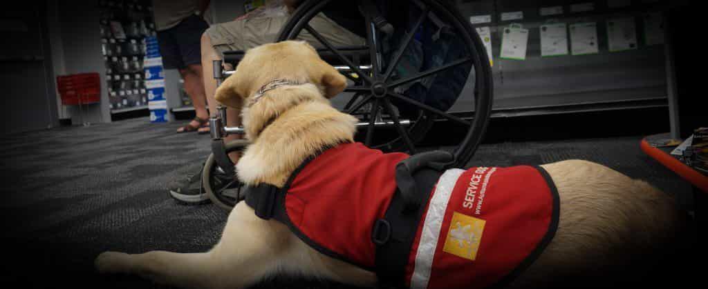 Highland Canine Training: Professional Dog Training Solutions