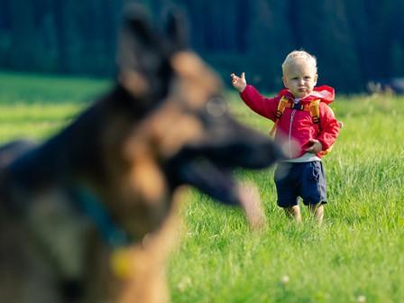 level 2 protection dog
