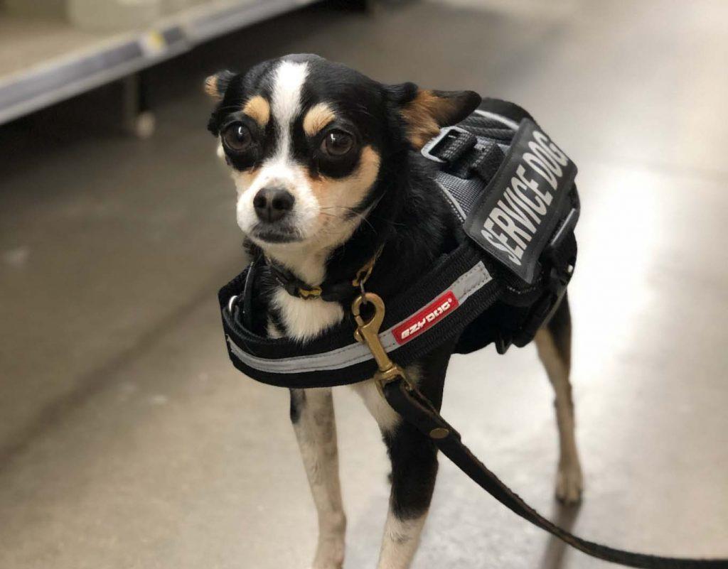 emotional support fake service dog