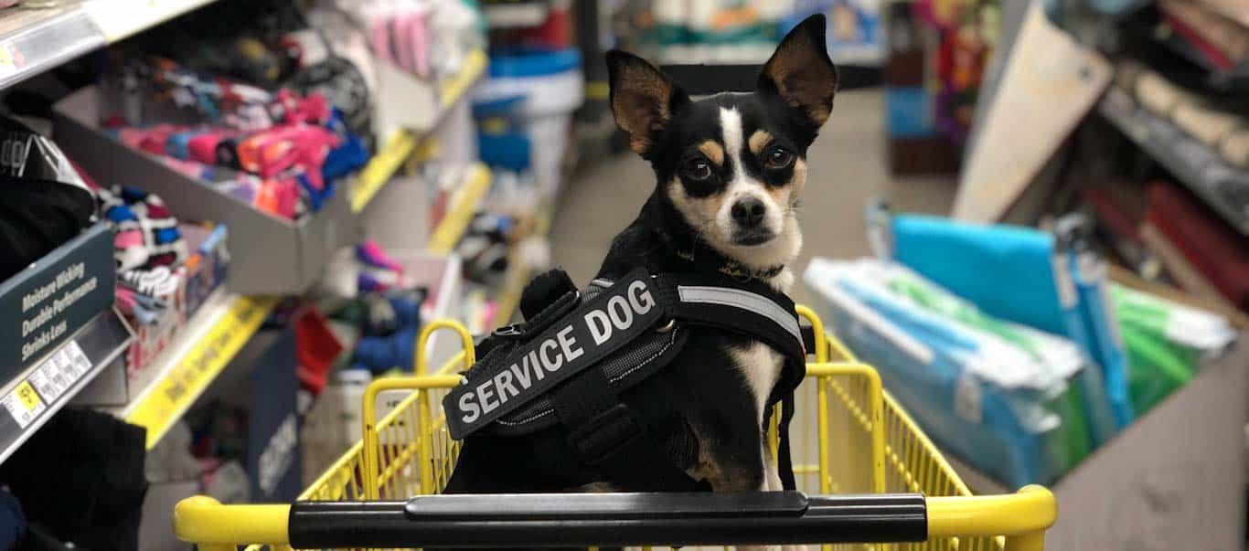 spot a fake service dog