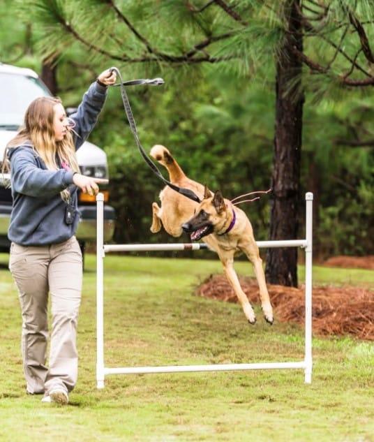 shana parsnow dog trainer agility